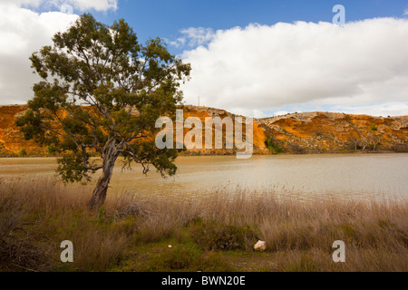 Afternoon light on golden cliffs on the Murray River at Walker Flat - Stock Photo