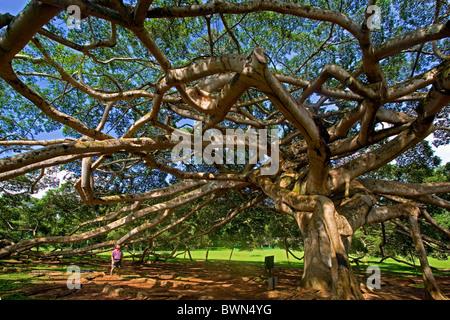 Royal Peradeniya Botanical Gardens Near Kandy Sri Lanka