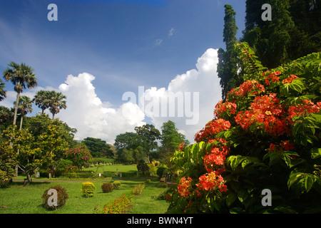 ... Sri Lanka Asia Peradeniya Royal Botanical Gardens Near Kandy Trees  Landscape Meadow Nature Park Asia
