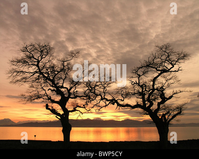 Lake Constance Bodensee Dusk Dawn Silhouette Sunset Trees Shore Coast Landscape Swiss alps ground - Stock Photo