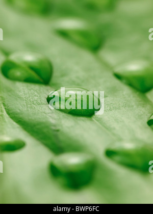 water drops on a leaf close up - Stock Photo