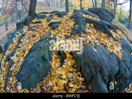 Autumn in Central Park and after a rain leaves are wet on the ground - Stock Photo