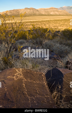 Petroglyph of animal quadruped carved by the Jornada Mogollon at the Three Rivers Petroglyph Site, New Mexico USA. - Stock Photo