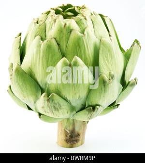 Artichoke on a white background - Stock Photo