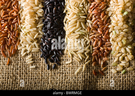 Six Varieties of Raw Brown Rice. From left to right: 1. Himalayan Red Rice - 2. Long-Grain Brown Rice - 3. Chinese - Stock Photo