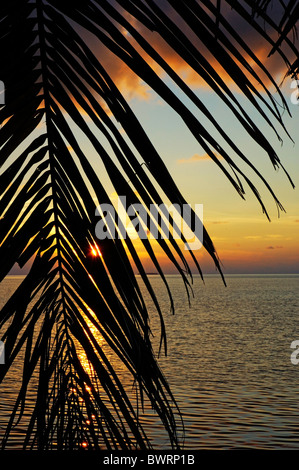 Sun setting over the sea seen through a silhouetted coconut palm frond, Maldives. - Stock Photo
