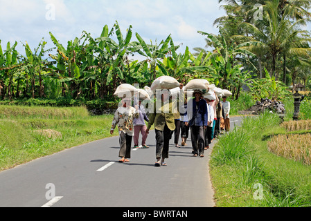 farmers walking home from the rice paddy carrying a bag of rice on their head. Ubud, Bali, Indonesia - Stock Photo