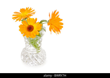 Three calendula flowers in cut-glass vase isolated on white - Stock Photo