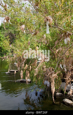 Plastic bags and other trash get caught and accumulate in trees and shrubs along the Los Angeles River at the Glendale Narrows Stock Photo
