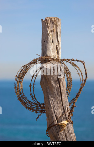 Roll of barbed wire hung on old fencing post. Sea in background. - Stock Photo