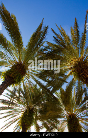 Low angle view of palm trees on sunny day - Stock Photo