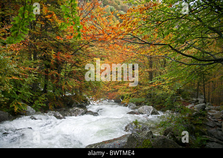 Forest in autumn colors. Pyrenees. Aragon. Spain - Stock Photo