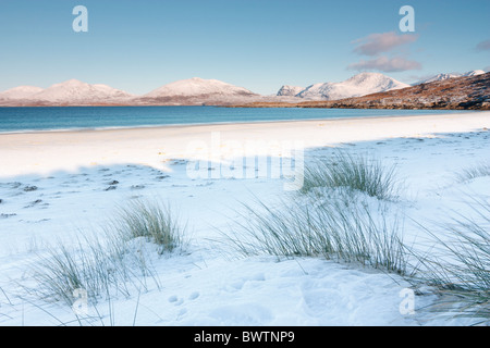 Marram grass sprouts out above the snow on traigh Rosamol on the isle of Harris