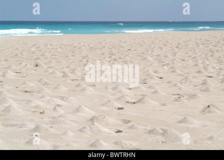 Yemen Socotra island Ras Irisseyl beach Arabic Arabian Arab travel UNESCO world natural heritage site Landsca Stock Photo