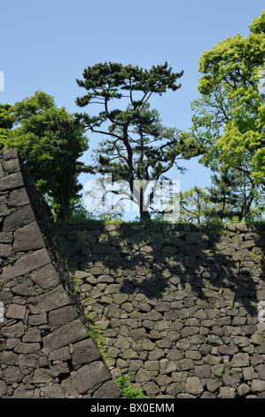 Trees on stone wall in the Imperial Palace Garden casting shadows, Tokyo, Japan - Stock Photo