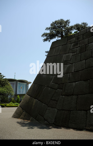 Tree on stone wall in the Imperial Palace Garden casting shadow, Tokyo, Japan - Stock Photo