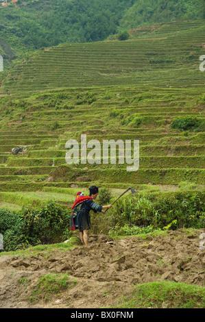 Yao woman with baby on her back working in the field, Longji Terraced Field, Longsheng, Guilin, Guangxi Province, - Stock Photo