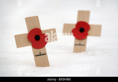 BRITISH REMEMBRANCE DAY POPPIES IN SNOW - Stock Photo