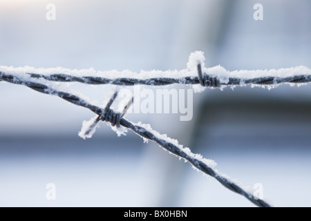 barbed wire covered in frost - Stock Photo