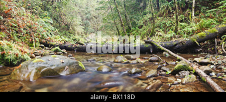 Fallen logs in forest stream - Stock Photo
