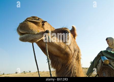 European boy sitting on a camel in the Thar Desert, near Bikaner, Rajasthan, India - Stock Photo