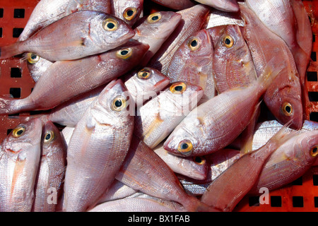 Fish on sale in the madina Sousse Tunisia model released - Stock Photo