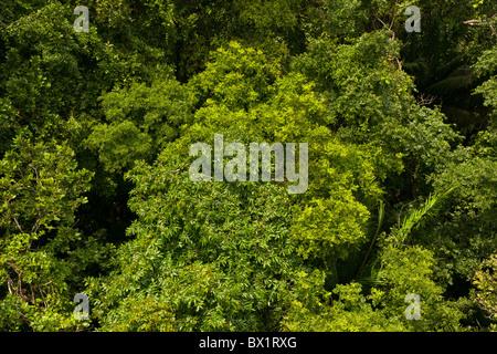 SOBERANIA NATIONAL PARK PANAMA - Jungle tree canopy Rainforest Discovery Center at Pipeline Road & SOBERANIA NATIONAL PARK PANAMA - Jungle tree canopy Rainforest ...