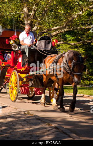 Texting while driving - carriage driver in Central Park, New York City USA - Stock Photo