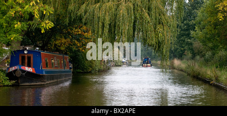Leisure narrowboats moored and making way on a canal with overhanging willow branches. Clear view of canal from - Stock Photo
