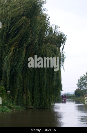 Portrait shot of Weeping Willow Tree blowing in the wind on the edge of waterway/canal/river - Stock Photo