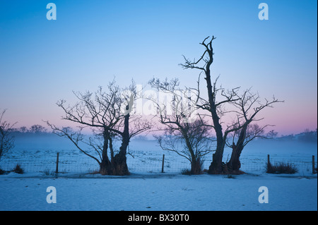 Silhoutette of trees and snow covered field in winter twilight, Brecon Beacons national park, wales - Stock Photo