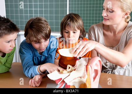 teacher demonstrating model of human body to three pupils - Stock Photo