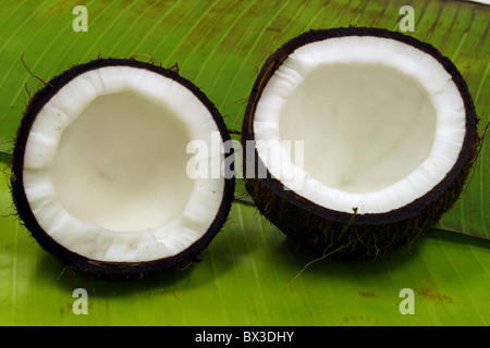 tropical fruit coconuts cut in half studio food - Stock Photo