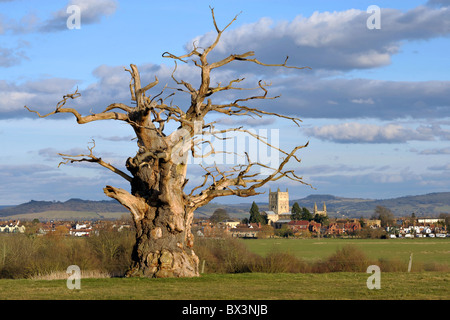 Tewkesbury Abbey in Gloucestershire is viewed from Bushley underneath a dead tree. - Stock Photo