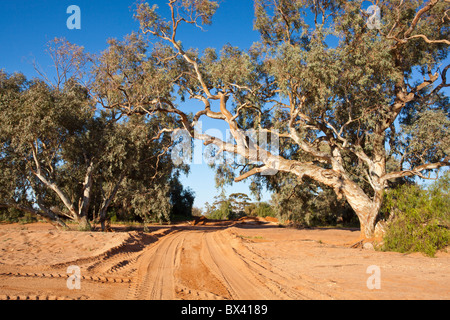 River red gums and a sandy track across a dry river bed at Silverton, near Broken Hill, New South Wales - Stock Photo