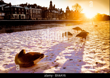Geese at Queen's Staith, York, with frozen river Ouse. - Stock Photo