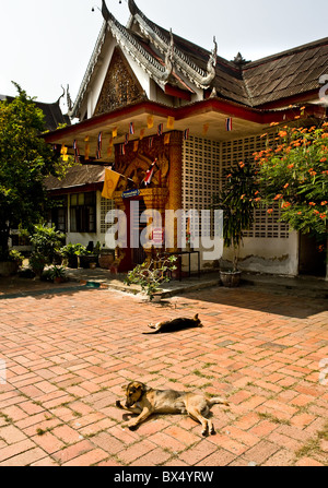 Dogs lying in the sun at Wat Buppharam in Chiang mai in Thailand - Stock Photo