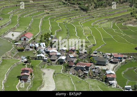 Stone-walled rice terraces of Ifugao culture at Batad village, UNESCO World Heritage Site, Cordillera, Luzon, Philippines - Stock Photo