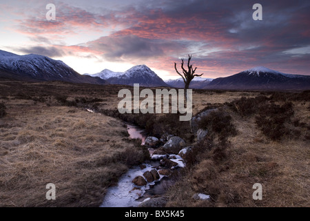 Winter view of Rannoch Moor at sunset with dead tree, frozen stream and snow-covered mountains in the distance, Scotland, UK