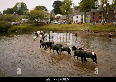 Gypsy travellers washing horses in the river Eden during the Appleby Horse Fair, Appleby-in-Westmorland, Cumbria, - Stock Photo