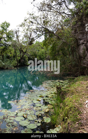 Water lilies in a river with beautiful green blue water in Tamasopo, Mexico - Stock Photo