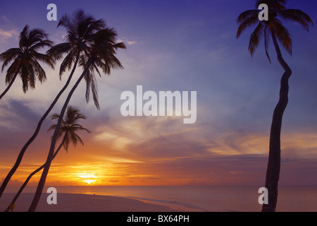 Palm trees and ocean at sunset, Maldives, Indian Ocean, Asia - Stock Photo