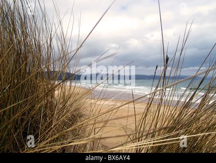 Marram grass on sand dunes - Stock Photo