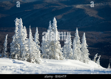 Image of beautiful trees covered with snow in winter forest - Stock Photo
