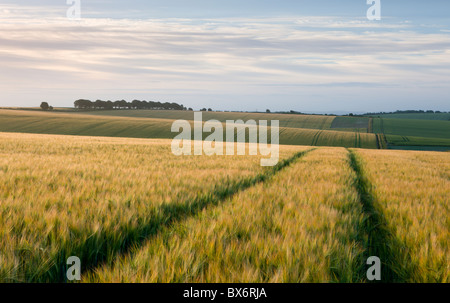 Agricultural crop fields near Cheesefoot Head in the South Downs National Park, Hampshire, England. Summer (July) - Stock Photo