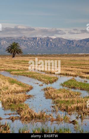 Around Deltebre, Natural Park of Delta de l'Ebre, Tarragona, Spain - Stock Photo