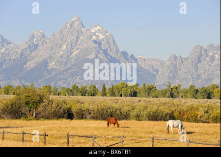 Horses and Teton Mountain Range, Grand Teton National Park, Wyoming, USA - Stock Photo
