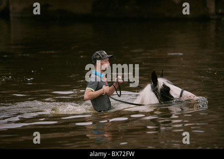 Gypsy traveller riding and washing horses in the river Eden during the Appleby Horse Fair, Appleby-in-Westmorland, - Stock Photo