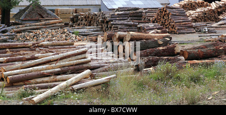 Logs timber industry trunks stacked outdoor stock - Stock Photo