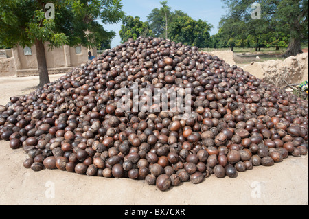 A pile of shea nuts on top of a mud oven being roasted. Mali, West Africa. - Stock Photo